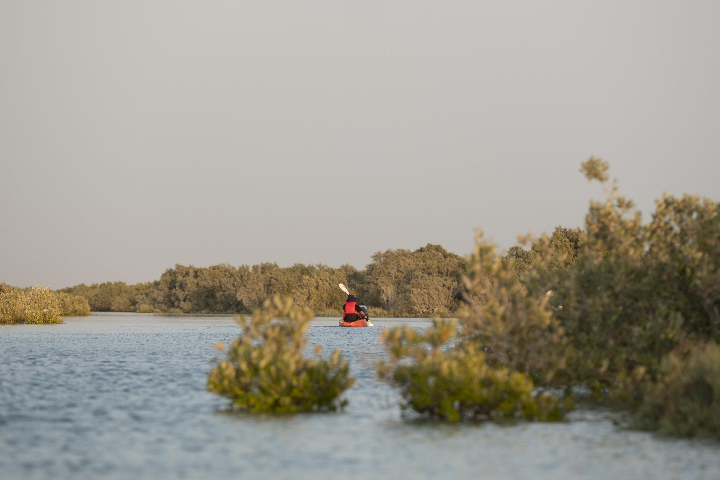 Surrounded by mangroves kayaking_Abu Dhabi_(c)Oliver Wheeldon.jpg