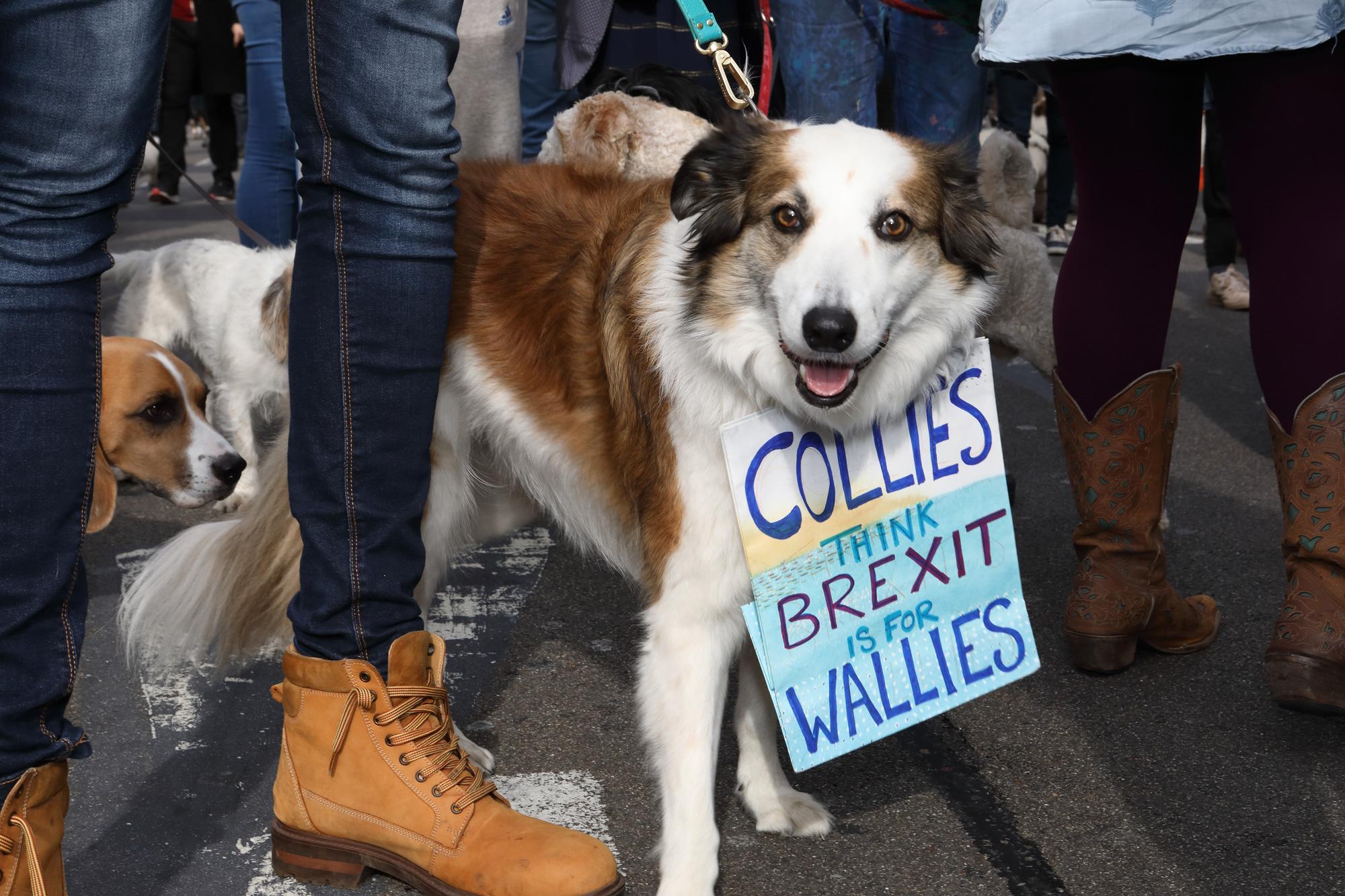 Wooferendum March, London 2018