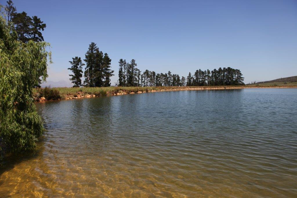 lourensford brinksberg dam (14).jpg