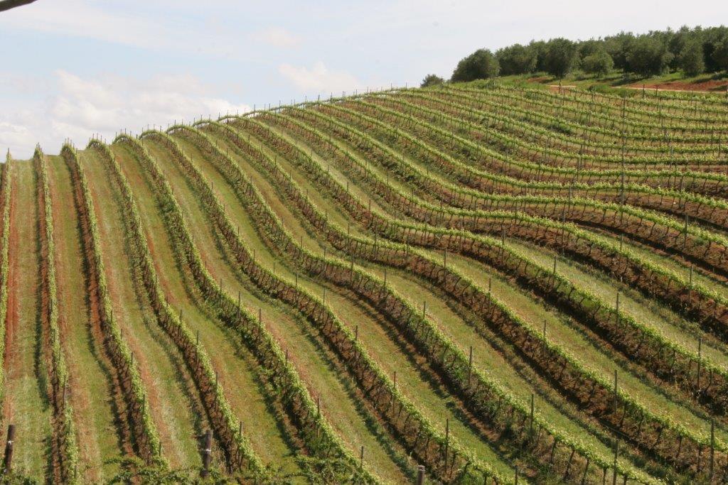 tokara vineyards (9).jpg