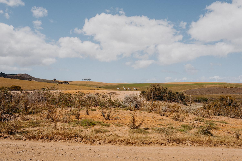 201018_suedafrika_1907.jpg