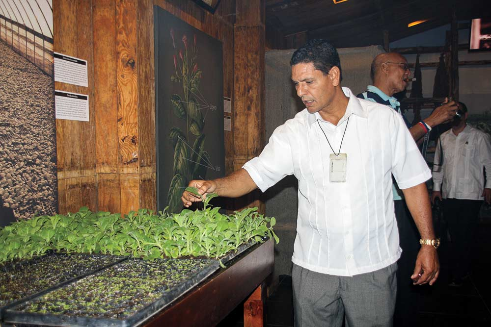 Leoncio Cruz inspecting the seedlings.