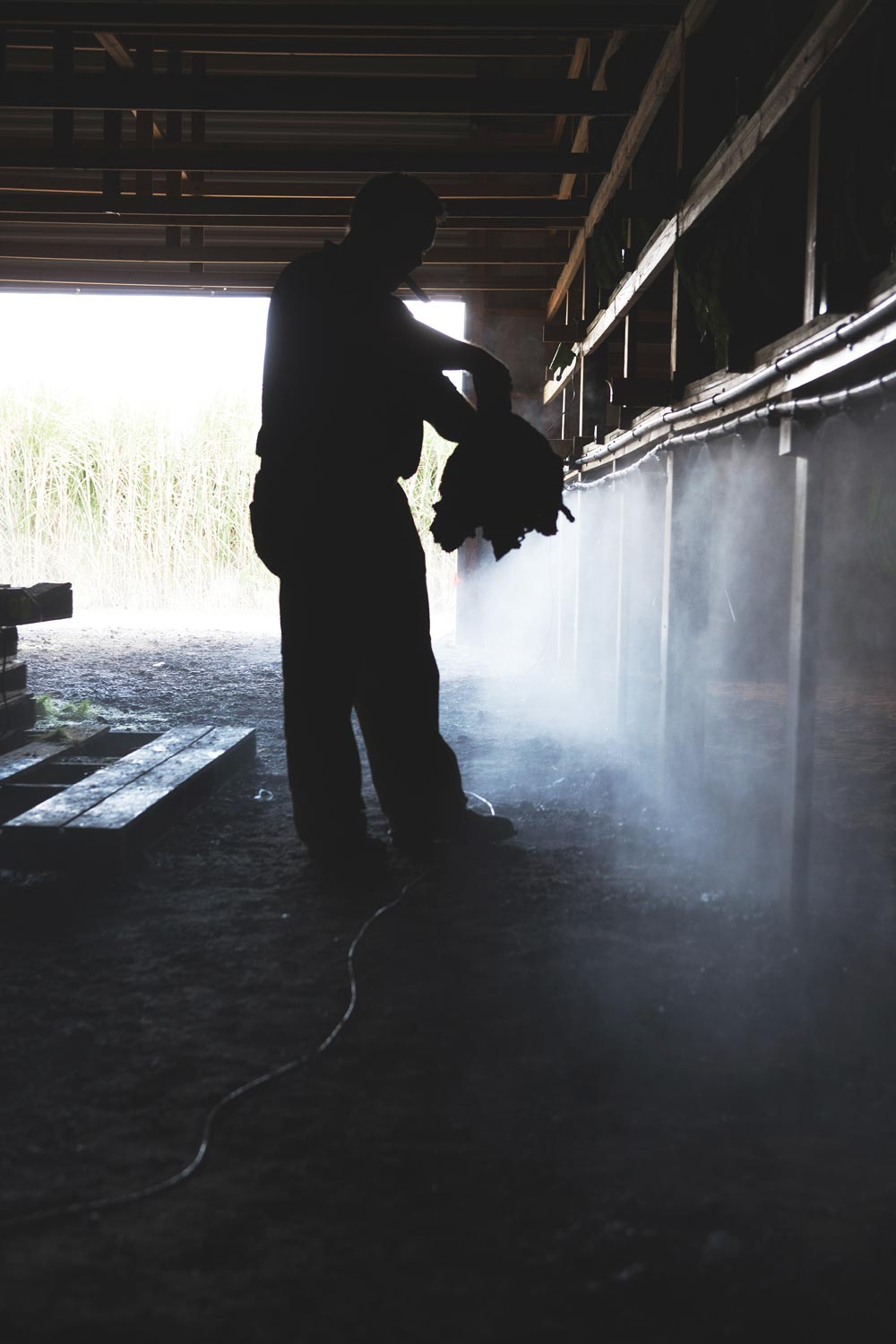 Jeff Borysiewicz examines tobacco in the curing barn on his Florida Sun Grown tobacco farm.  (image: Zach Ramsey)