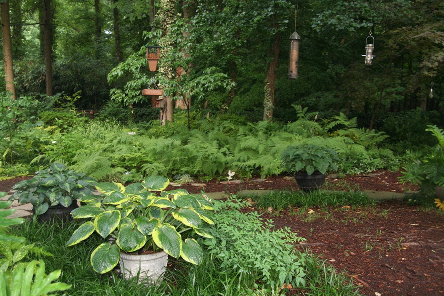 hosta-green-and-golden-IMG_3840creative-friends-series.JPG