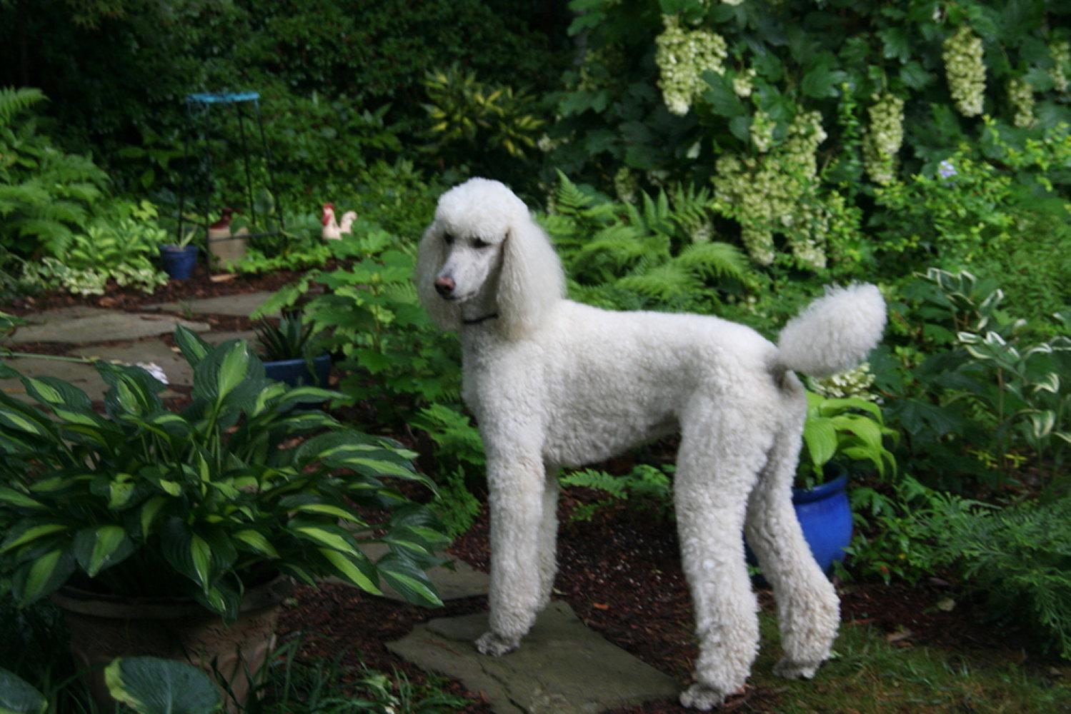 poople-gardens=IMG_3842creative-friends-series.JPG