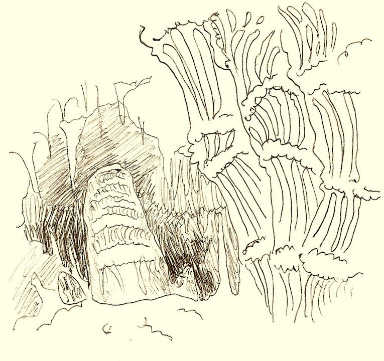 cari-palazzolo-carlsbad-caverns.jpg