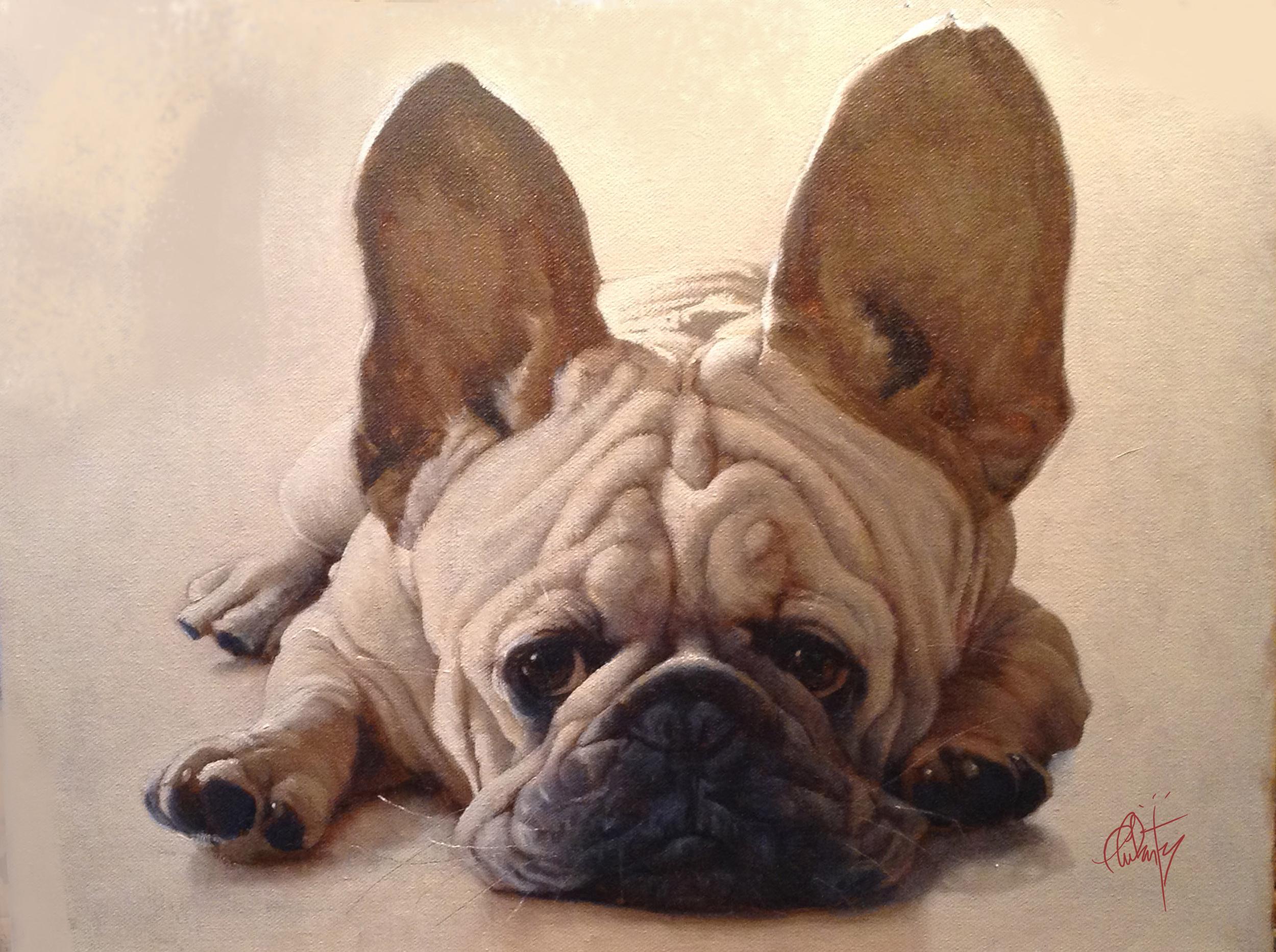 4_Frenchbulldog.jpg