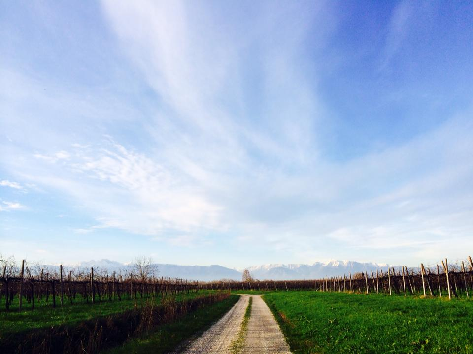 Vineyard Paths