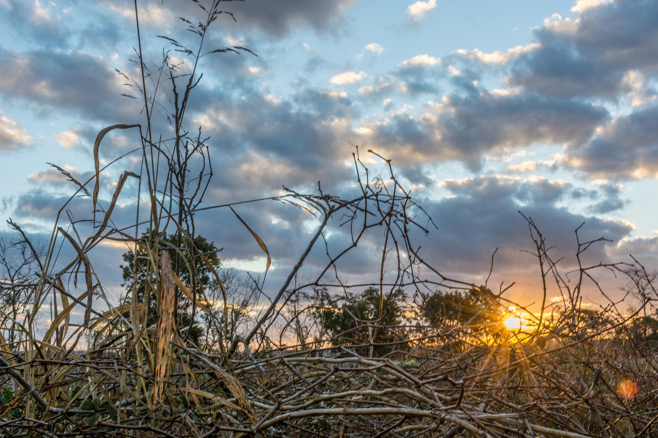 Sunrise-301.jpg