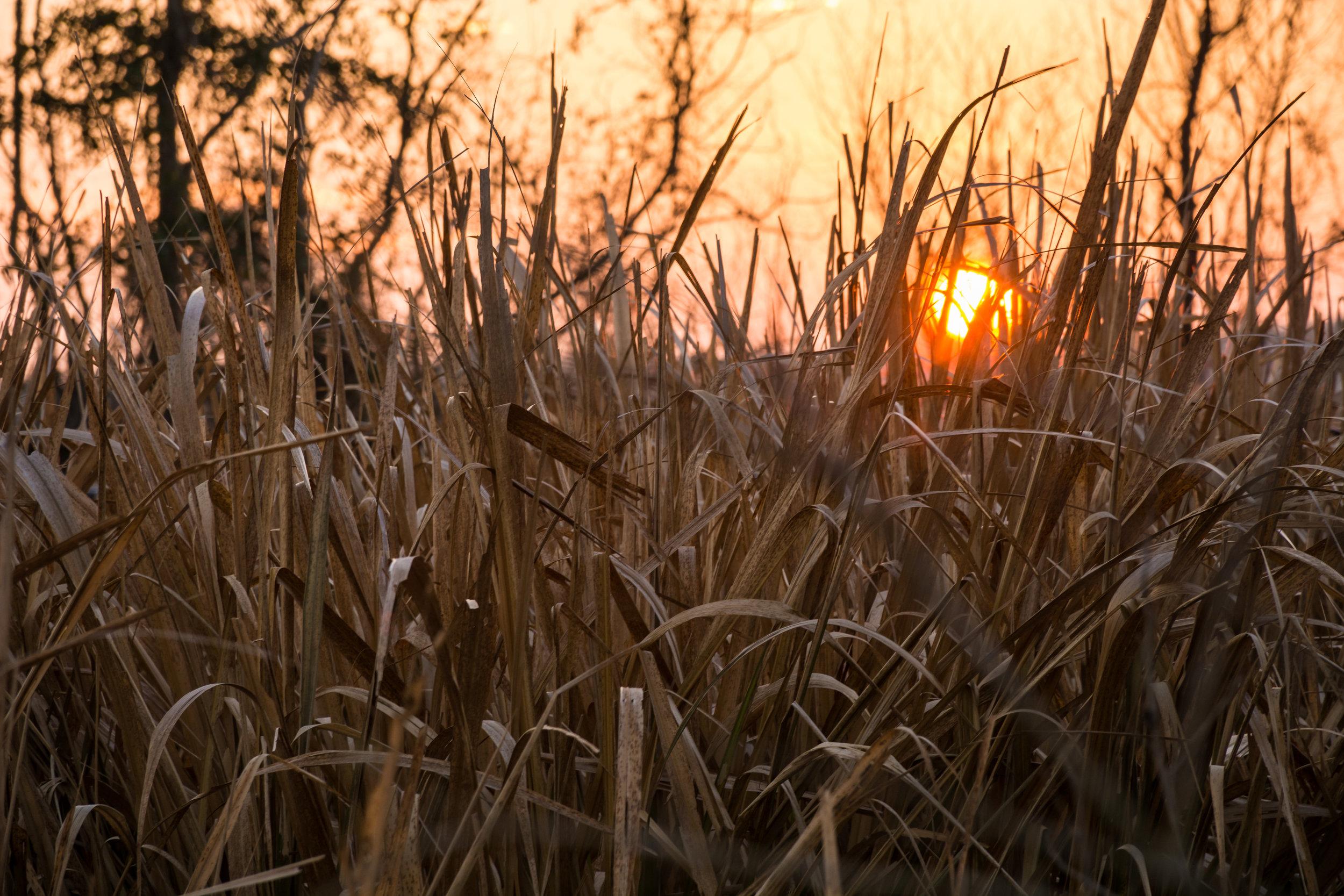 tangled sunrise-101.jpg