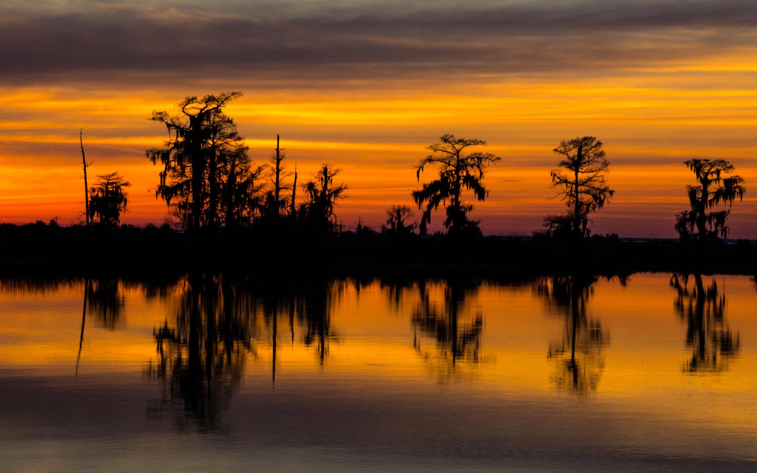 Swamp Reflections-400.jpg