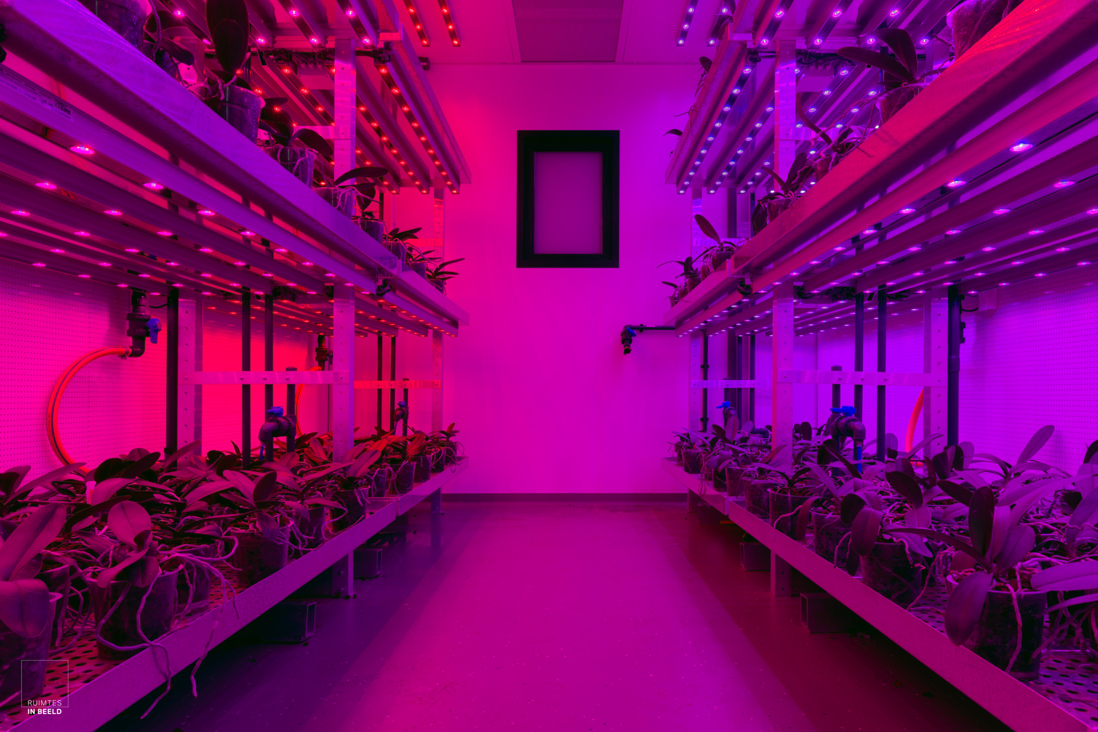 Fytotron met innovatief kleurenspectrum, afgestemd op de beoogde groei van de gewassen. Aangelegd door  Nijssen Klimaat- en Koudetechniek .