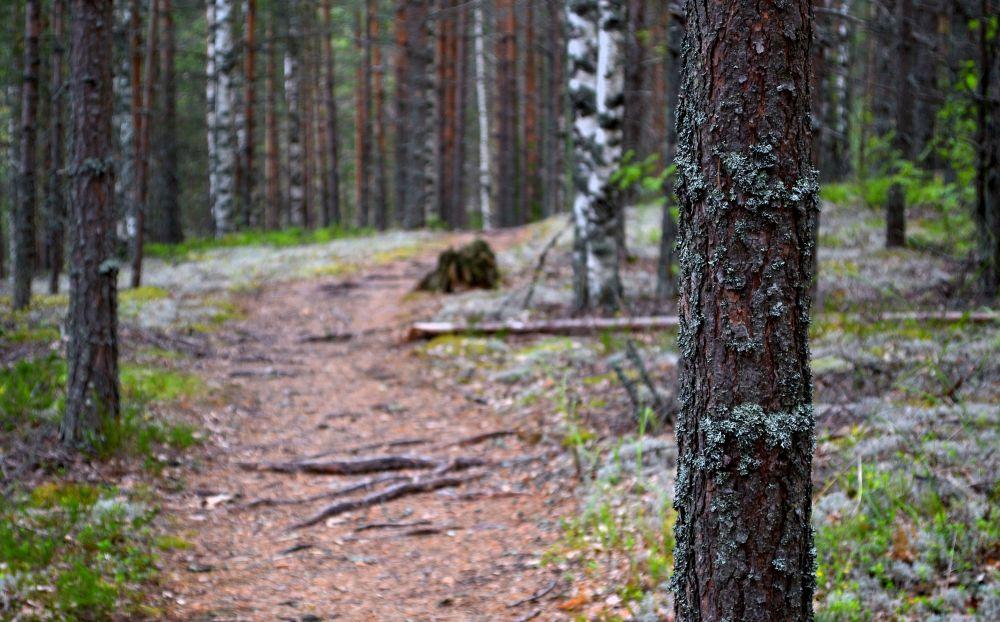 Nimestä huolimatta Patvinsuolta löytyy runsaasti mäntykangasta retkeilyalustaksi.