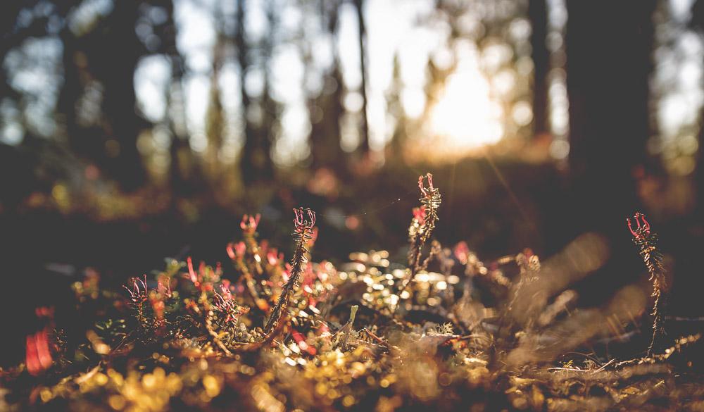 Sunlight through the undergrowth
