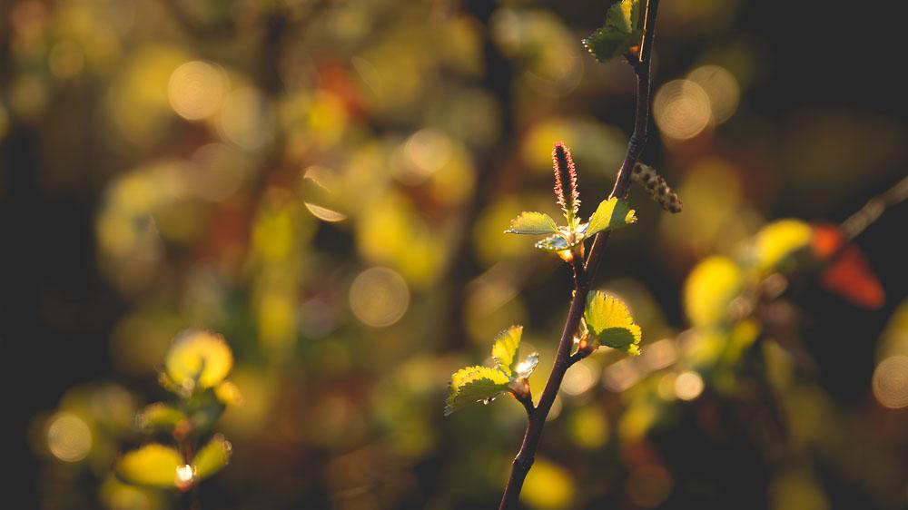 Backlit green plant.