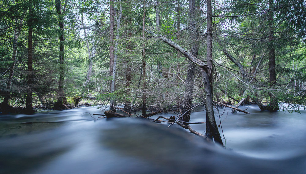 The nearby stream was so flooded even the spruce trees were in the water. (Long exposure shot)