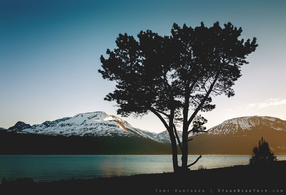 A lonely tree by the fjord in Skibotn. Or not lonely, perhaps. It could have a very active social life for all I know.