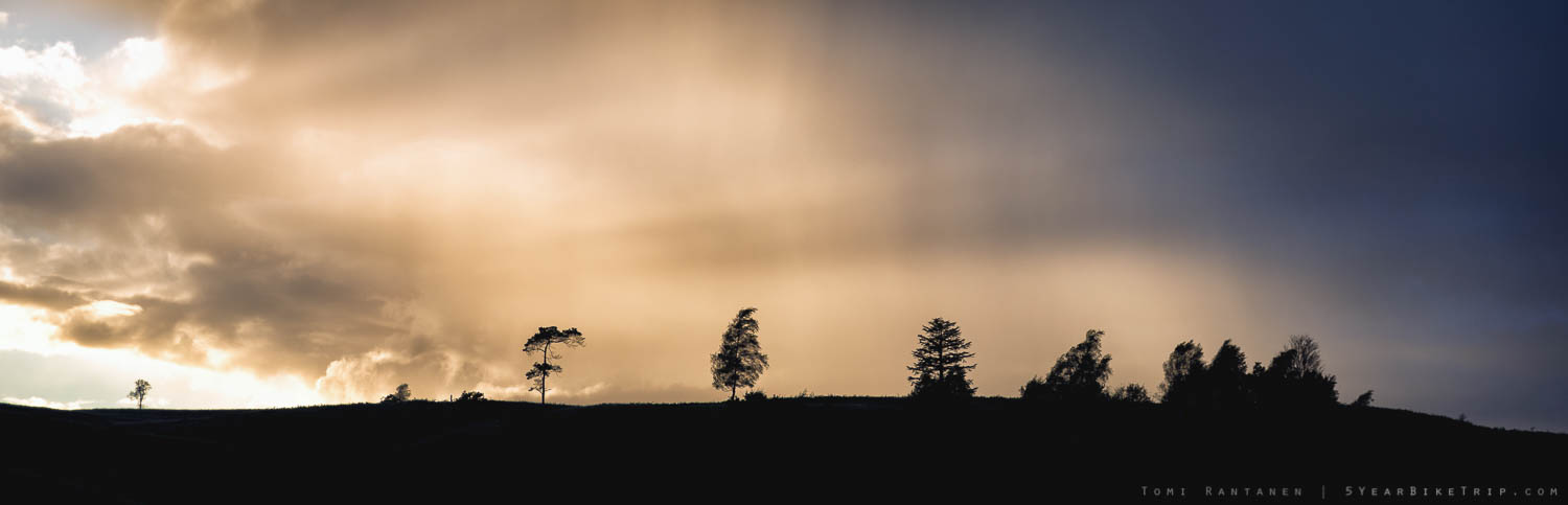 Trees silhouetted against evening clouds.