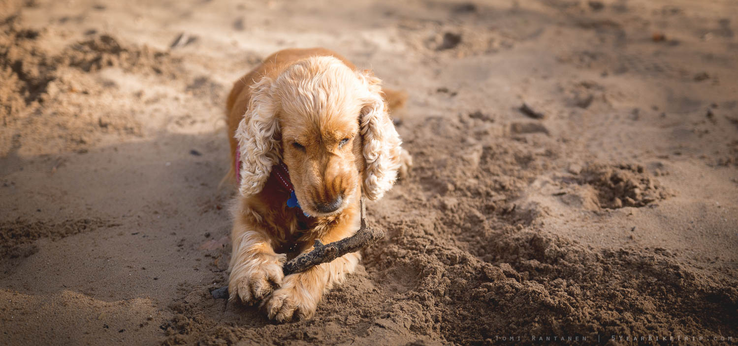 Nothing can get between Kira and her stick. Except another stick.