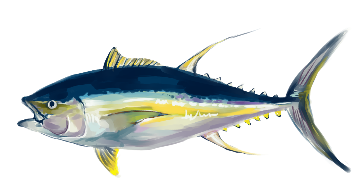 Tuna Study