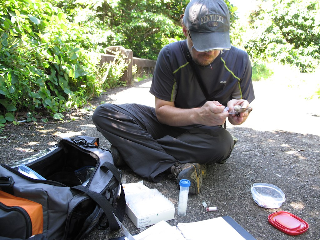 Collecting blood samples on Lanyu Island, Taiwan May 2012
