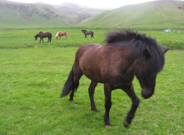 Horse-Farm-Iceland-614x450.jpg