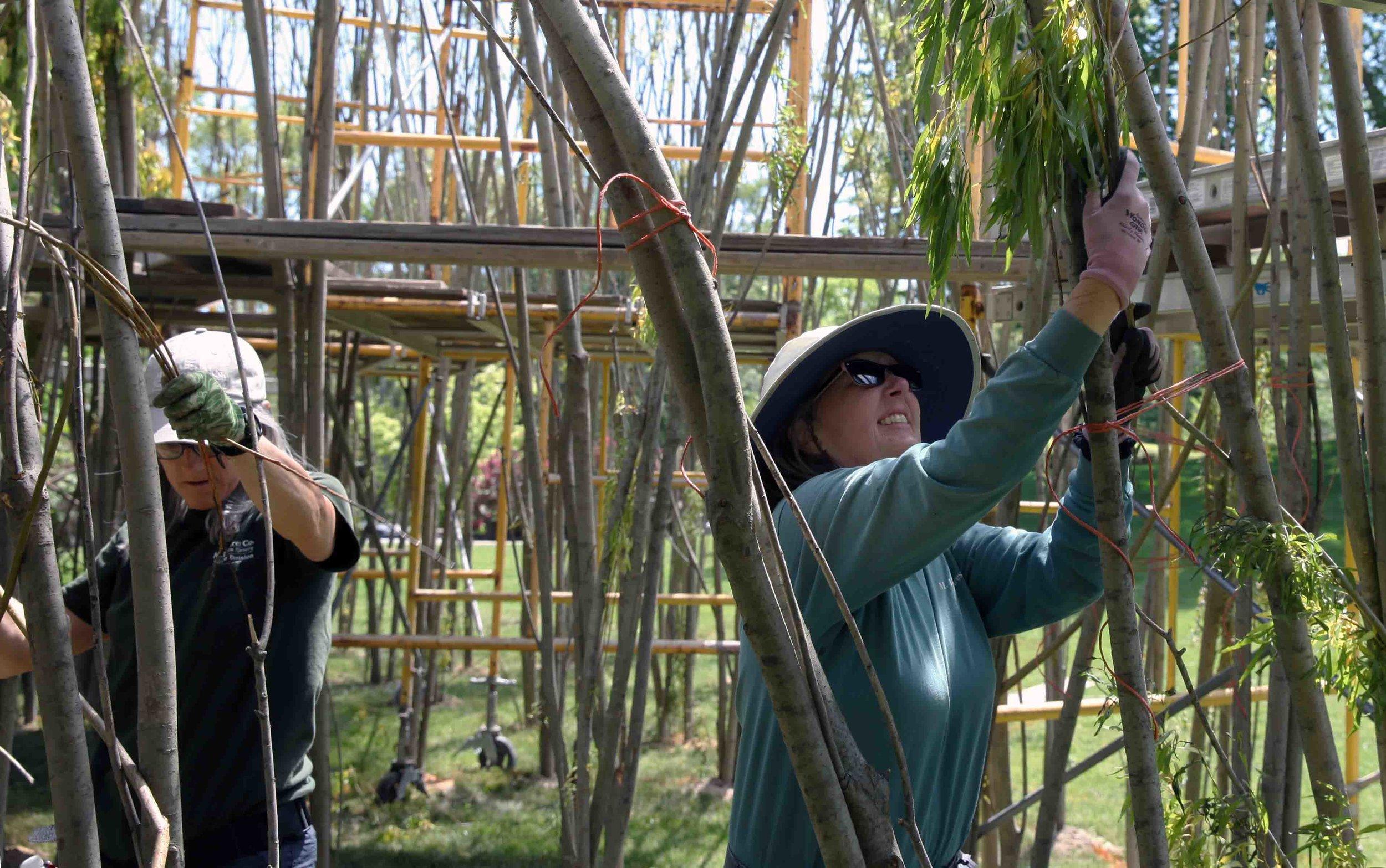 volunteers weaving willows_3560 copy.jpg