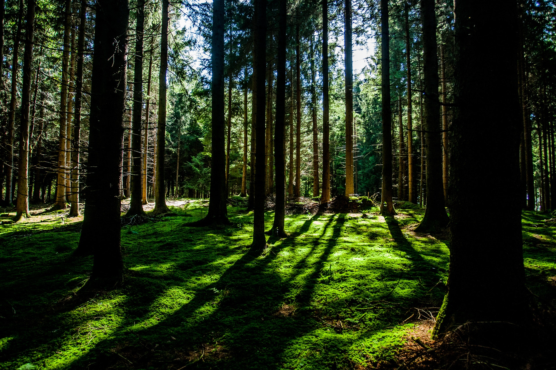 See the forest. -