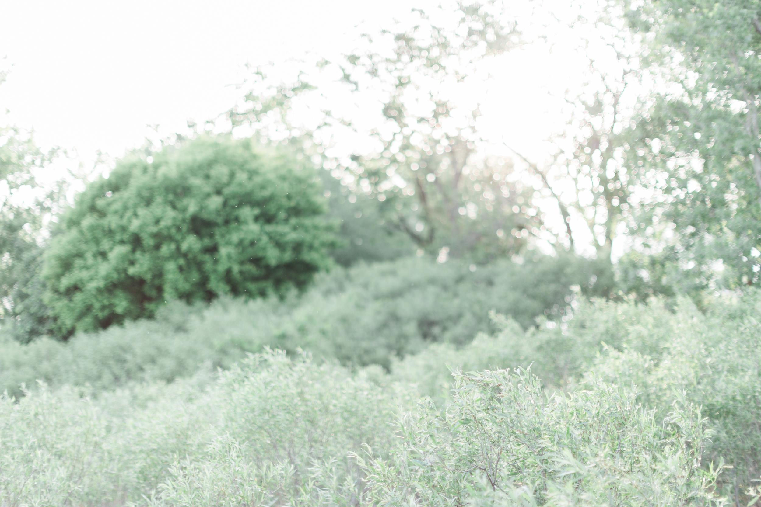 Cari Zhu Photography - Osgoode Hall Toronto Wedding Engagement-9620.jpg