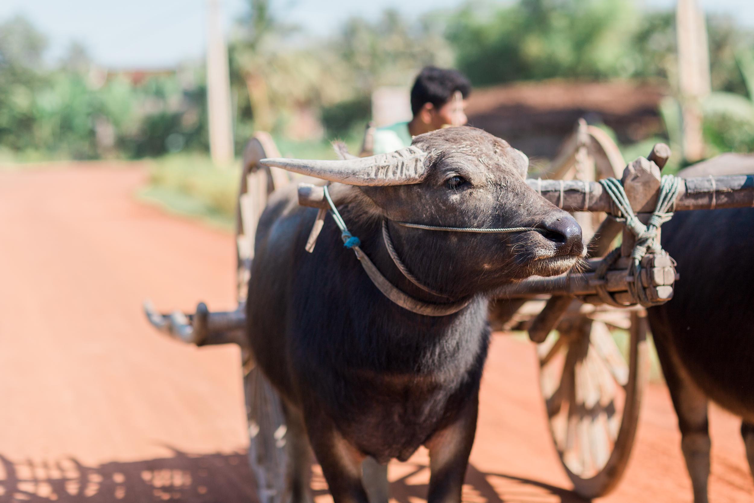 Cari Zhu Photography - Cambodia Siem Reap South East Asia Travel-1592.jpg