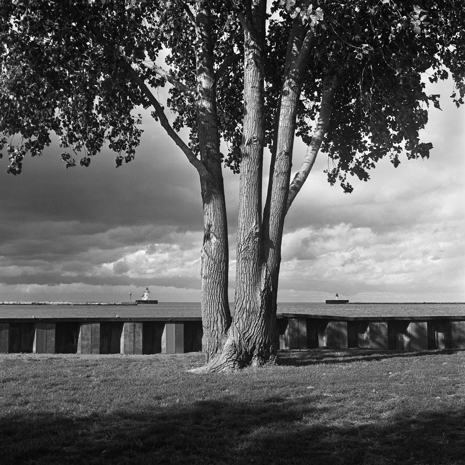Whiskey Island Tree Cleveland, OH 6x6 BW film