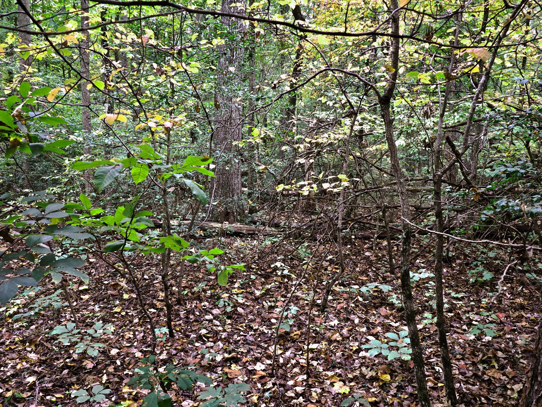 The Wilderness Wilderness National Battlefield