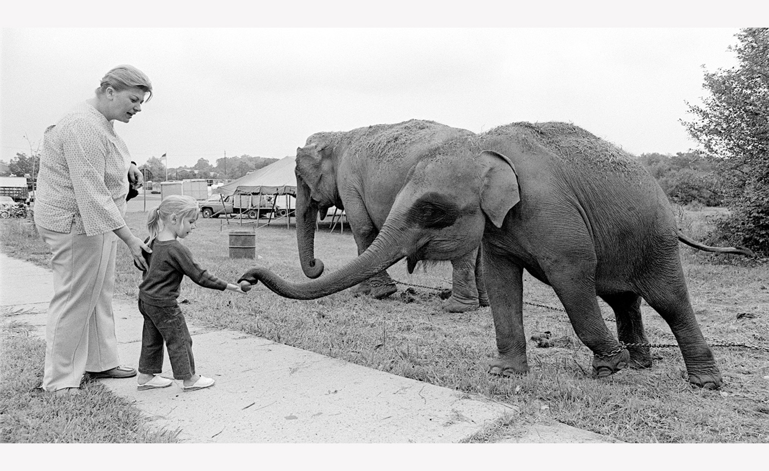Feeding the Elephant New Jersey 1975