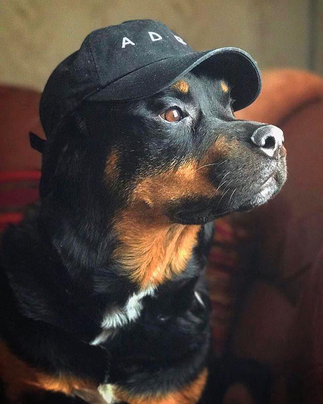 Get at me, dog. 📿