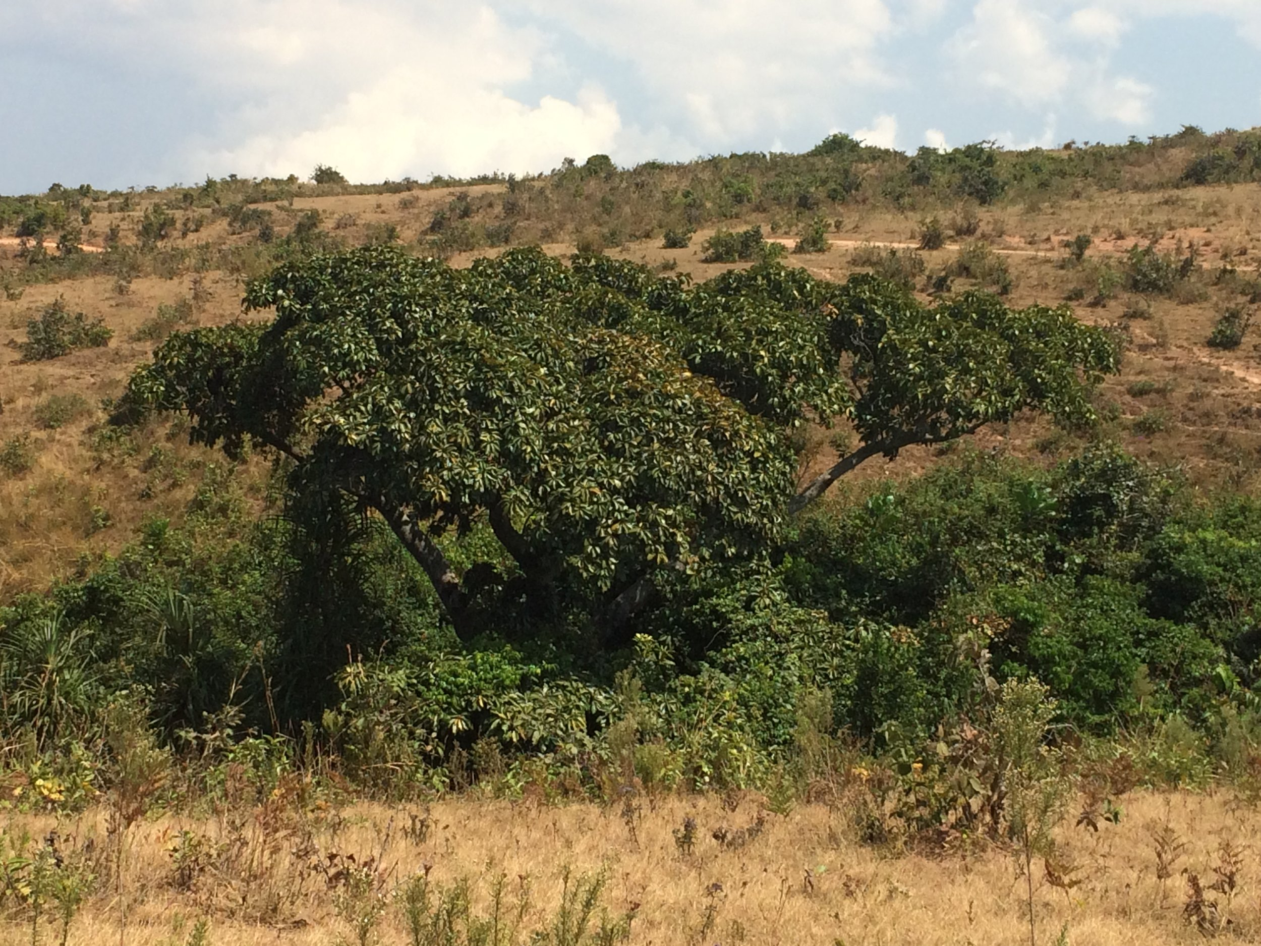 A sacred grove persisting amidst a deforested landscape in Tanzania