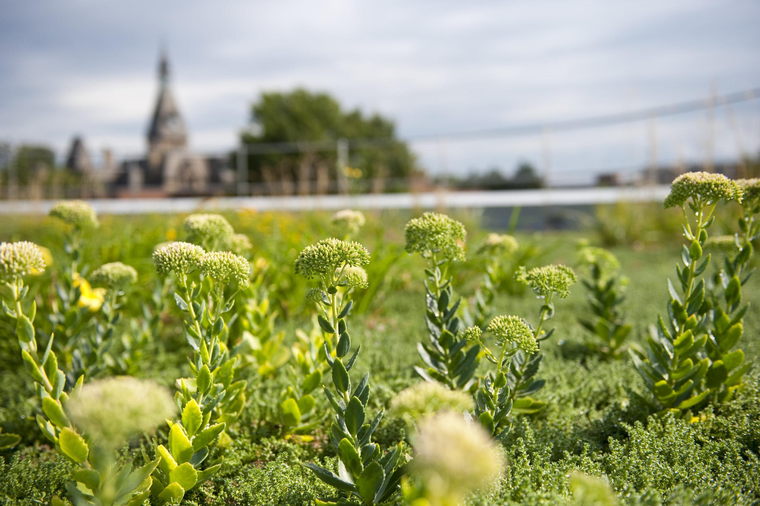 Green Roof | Minneapolis, MN
