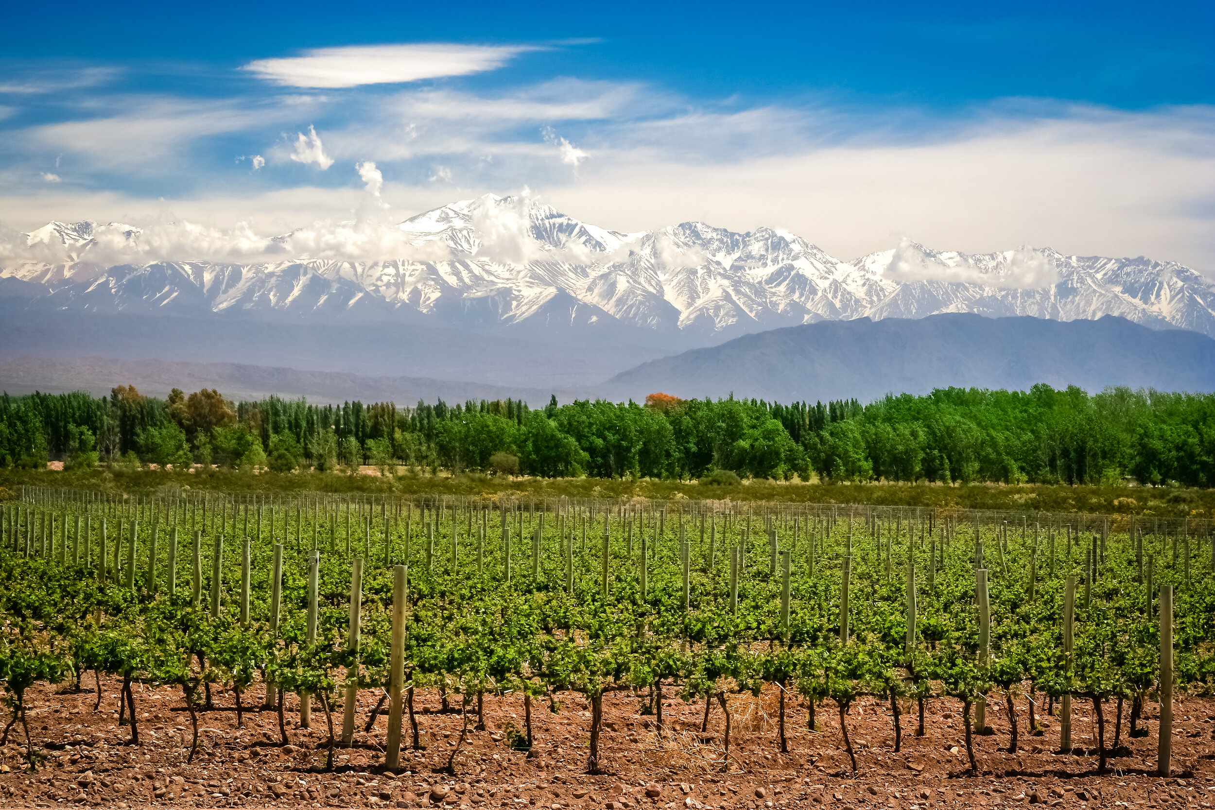 Organic vineyards near Mendoza in Argentina with Andes in the background.jpg