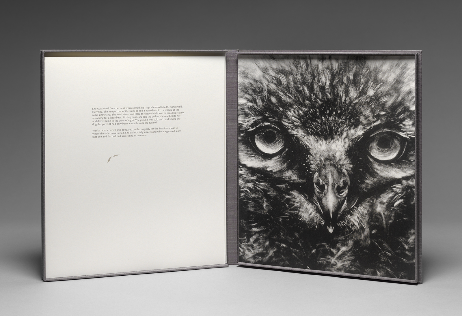 Messenger - Owl.jpg