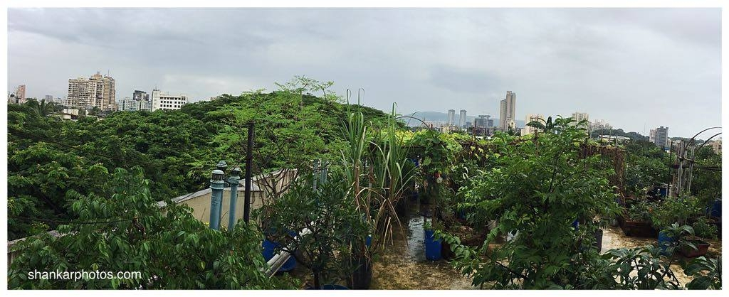 Rooftop garden in Mumbai, part of Neeraja's research