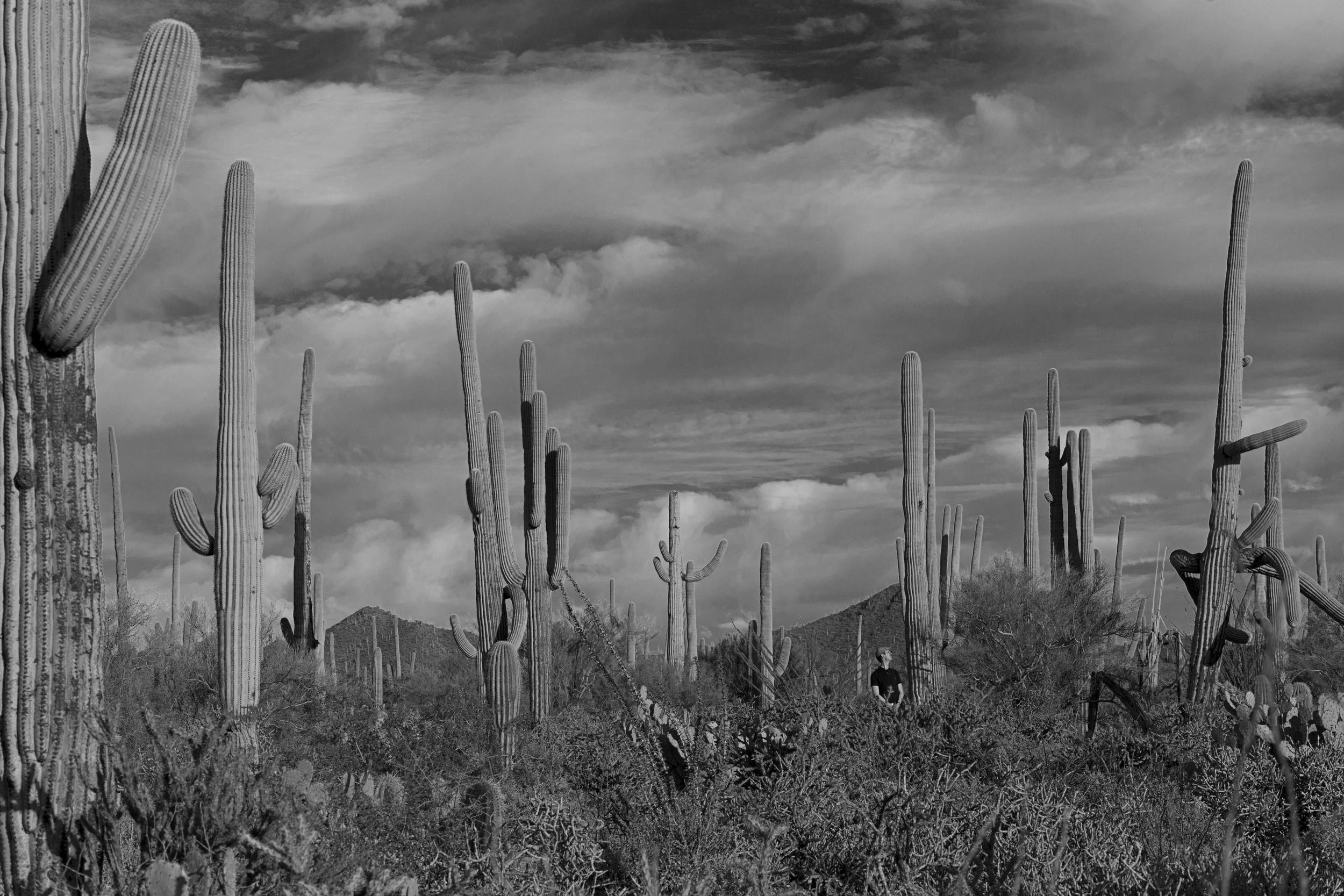 Saguaro National Park, AZ, USA