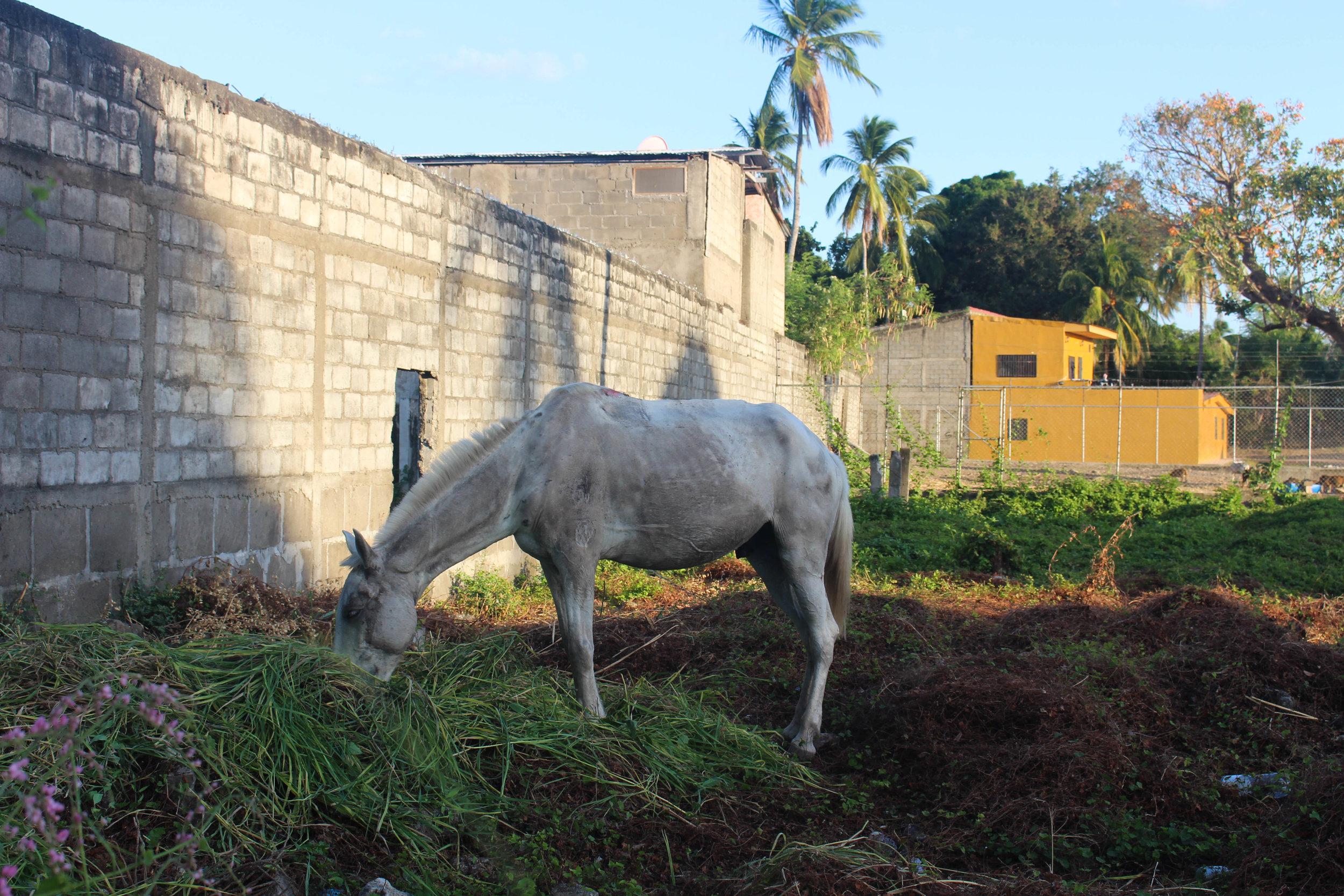 Granada- horse in grass-NatalieNehlawi.jpg