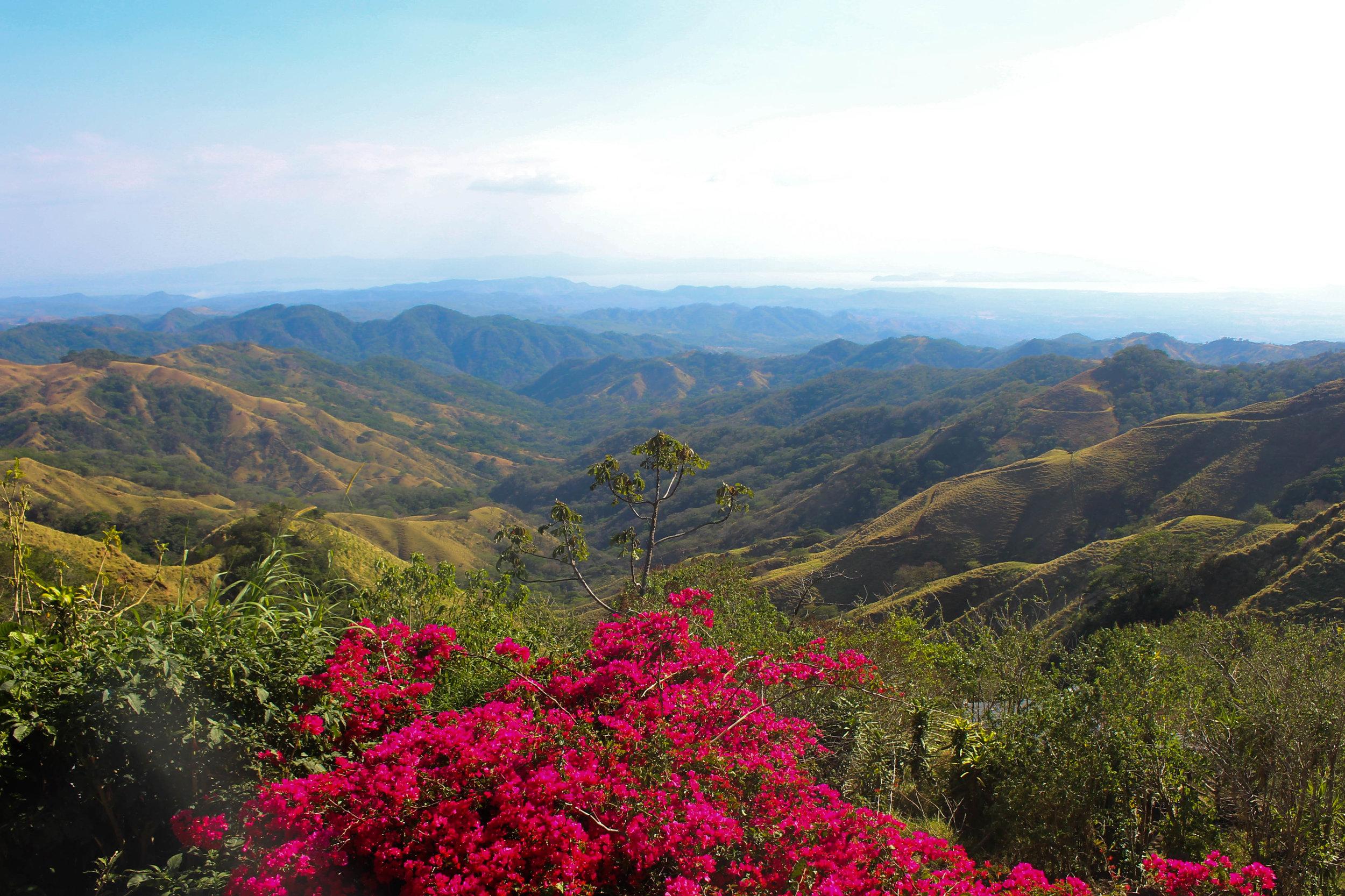 Views from Coffee Plantation