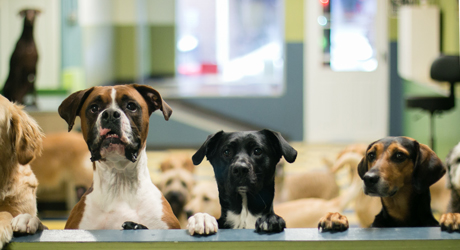 dog-daycare-philadelphia