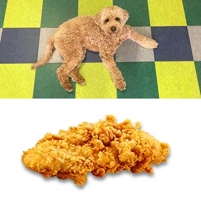 What do you dip your chicken fingers in? . . . . . . #chickem #dip #chicken #chickenfingers #ilovechicken #foodie #phillyfoodie #eatpraylove #phillydogschool #philly #dogsofinstagram #dog #phillylove #phillydog