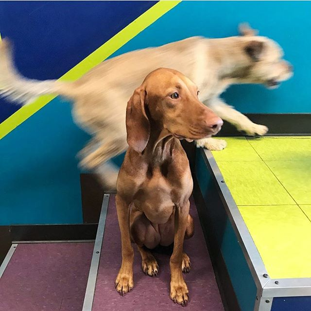 When life just seems to pass you by . . . . . . #overwhelmed #lifeislife #life #justlife #adogslife #wow #justpassingby #justpassingthrough #dog #dogs #dogsofinstagram #dogsofphilly #cute #cutedog #phillydogschool #phillydog