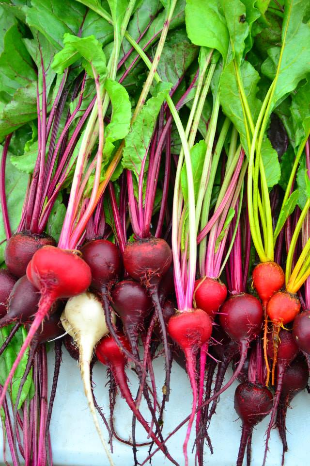 Mixed colours of beets