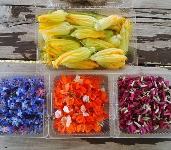 Various Edible Flowers