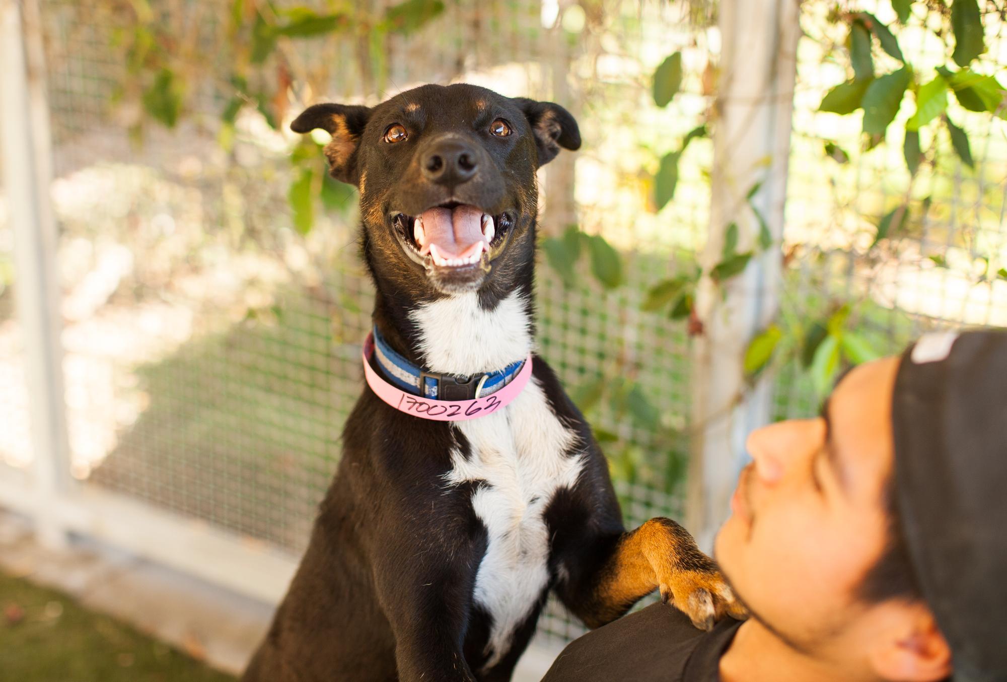 009_animal-photography-cats-dogs-volunteer_MG_4745.jpg