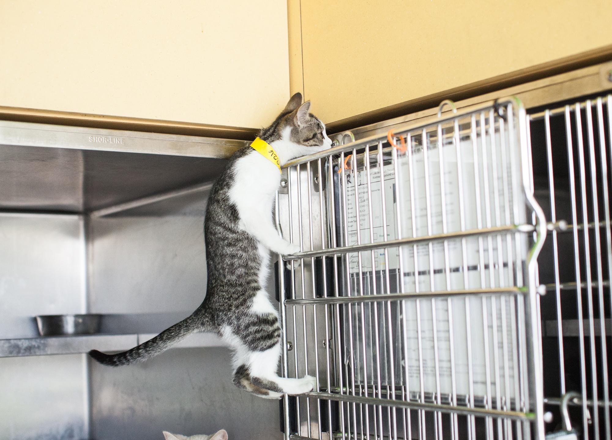 011_animal-photography-cats-dogs-volunteer_MG_9077.jpg
