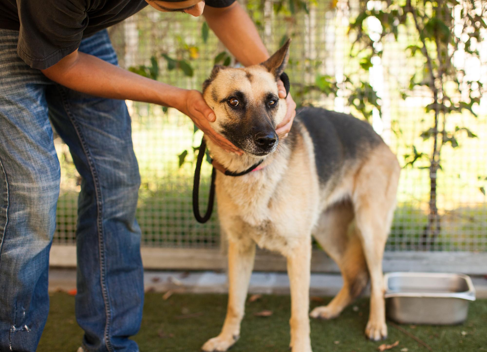 026_animal-photography-cats-dogs-volunteer_MG_4816.jpg